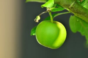 æbletræ